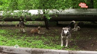 Как уберечься от нападения собак: основные правила