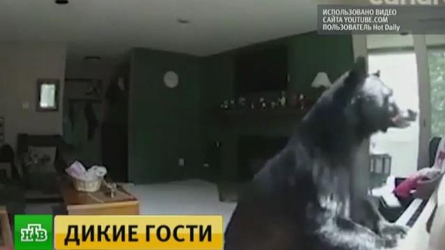 Медведь проник вдом камериканцам исыграл на пианино.Камчатка, США, животные, курьезы, медведи.НТВ.Ru: новости, видео, программы телеканала НТВ