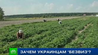<nobr>Из-за</nobr> введения безвиза Украины сЕС могут пострадать польские фермеры