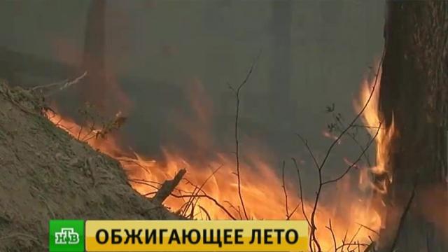 В Иркутской области лесные пожары подступают к деревням.Иркутская область, МЧС, авиация, лесные пожары.НТВ.Ru: новости, видео, программы телеканала НТВ