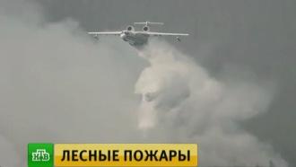 В Сибири сохраняется режим ЧС: горит более 50 гектаров леса