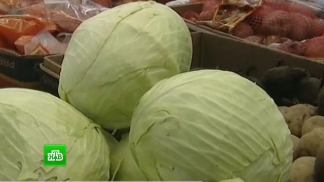 Холодное лето стало причиной подорожания овощей в России.еда, магазины, продукты, тарифы и цены, торговля.НТВ.Ru: новости, видео, программы телеканала НТВ