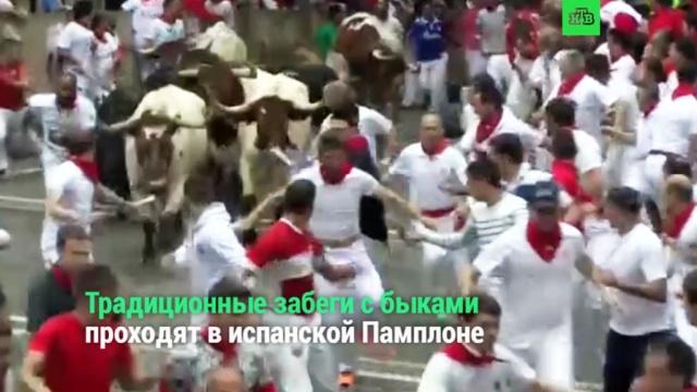 Массовые забеги сбыками вИспании.НТВ.Ru: новости, видео, программы телеканала НТВ