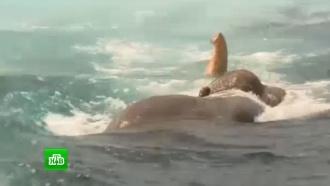 ВМС <nobr>Шри-Ланки</nobr> спасли тонущего воткрытом море слона