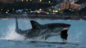 Майкл Фелпс проиграл заплыв большой белой акуле