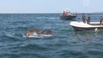 Военные <nobr>Шри-Ланки</nobr> спасли еще двух слонов от гибели вморе