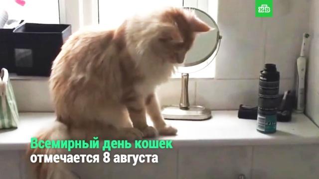 Всемирный день кошек.НТВ.Ru: новости, видео, программы телеканала НТВ