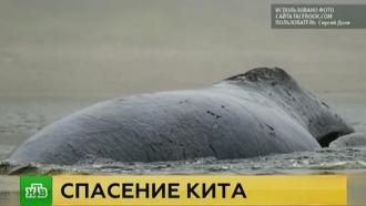 Специалисты оценили шансы застрявшего вустье реки кита на спасение