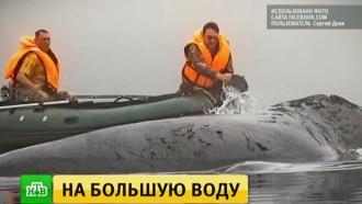 Застрявший вустье реки кит освободился иушел вморе