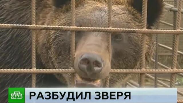 Покормил сгущенкой: встреча с медведем закончилась для пьяного ампутацией руки.Иркутская область, медведи, пьяные, рестораны и кафе.НТВ.Ru: новости, видео, программы телеканала НТВ