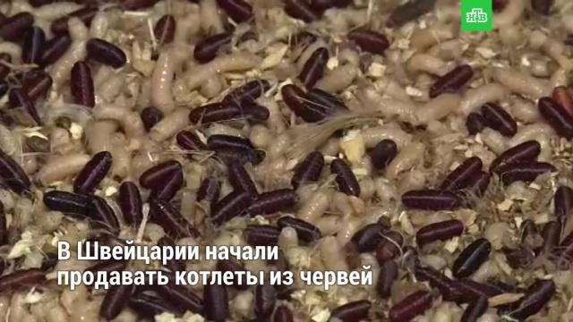 ВШвейцарии начали продавать котлеты из червей.ЗаМинуту, еда, кулинария, насекомые, продукты, экология.НТВ.Ru: новости, видео, программы телеканала НТВ