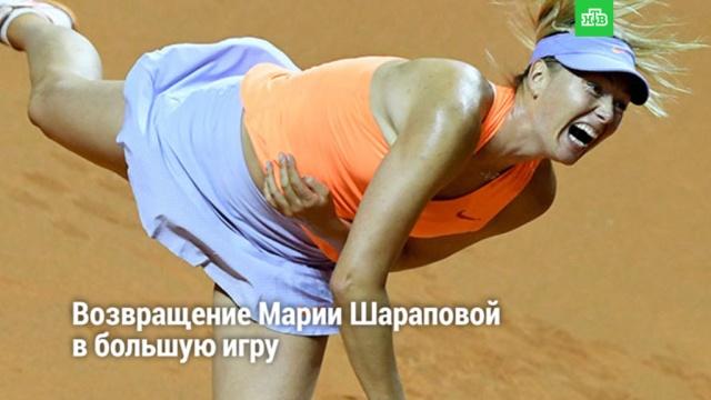 Возвращение Марии Шараповой вбольшую игру.НТВ.Ru: новости, видео, программы телеканала НТВ