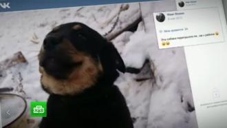 На Урале хозяева растерзавших девочку собак предстали перед судом