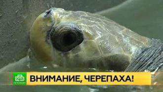 Мальдивская черепаха-инвалид получила прописку в Петербурге