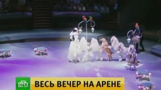 Зарубежные артисты в цирке на Вернадском восхитили москвичей опасными трюками
