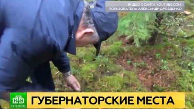Губернатор Ленобласти сходил за грибами и поделился любимыми рецептами.YouTube, Ленинградская область, грибы, губернаторы, соцсети.НТВ.Ru: новости, видео, программы телеканала НТВ