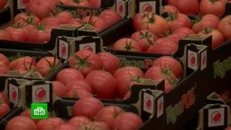 Россельхознадзор заподозрил Белоруссию в реэкспорте турецких помидоров