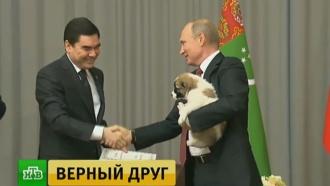 Туркменский лидер подарил Путину щенка