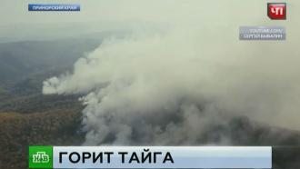В Приморье из-за лесных пожаров объявлен режим ЧС