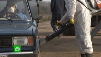 В двух селах Башкирии из-за вспышки ящура объявлен карантин