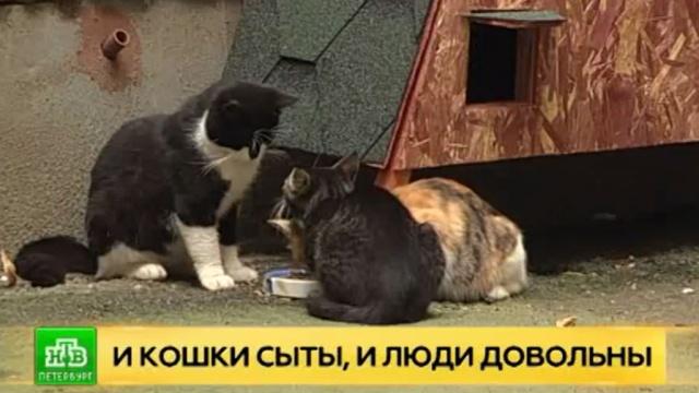 В петербургских дворах стали появляться домики для уличных кошек.Санкт-Петербург, благотворительность, животные, кошки.НТВ.Ru: новости, видео, программы телеканала НТВ