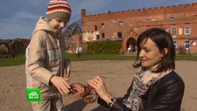 В Калининграде кролики и поросята помогают детям с тяжелыми недугами.Калининград, болезни, дети и подростки, животные, здоровье.НТВ.Ru: новости, видео, программы телеканала НТВ