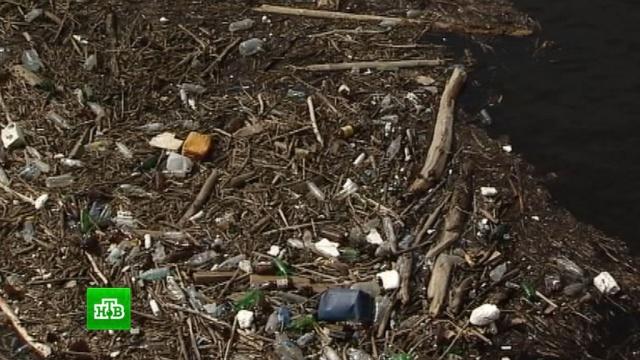 Экологи заявили о катастрофическом состоянии Волги.Волга, реки и озера, экология.НТВ.Ru: новости, видео, программы телеканала НТВ