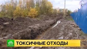 Росприроднадзор ужаснулся состоянием Невы в районе Отрадного