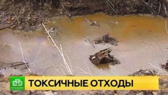 Инспекторы Росприроднадзора обнаружили пропитанную мазутом землю в нескольких метрах от Невы