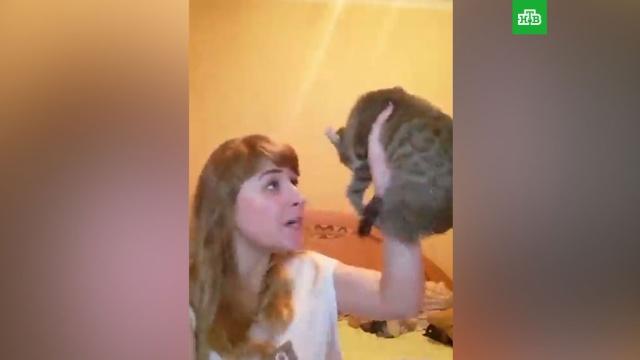 Полиция изучает видео избиения москвичкой кота за порванные шторы.жестокость, животные, Москва, полиция.НТВ.Ru: новости, видео, программы телеканала НТВ