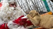 Путешествие Деда Мороза. Праздник во Владивостоке.НТВ.Ru: новости, видео, программы телеканала НТВ