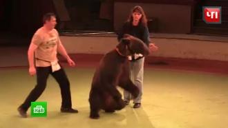 Дрессировщики вМоскве ищут дом для уволенных из цирка медведей