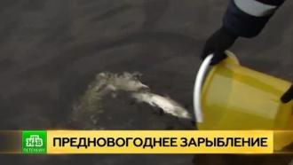 Петербургский «Водоканал» пополнил популяцию сигов в Неве