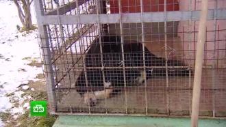 Ветеран МВД будет судиться с хозяевами напавшего на него пса