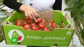 Донбасс восстанавливает сельское хозяйство под украинской блокадой