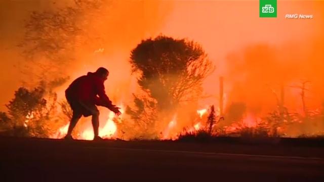 Калифорниец едва не бросился в огонь ради спасения кролика: видео.США, героизм, животные, лесные пожары.НТВ.Ru: новости, видео, программы телеканала НТВ