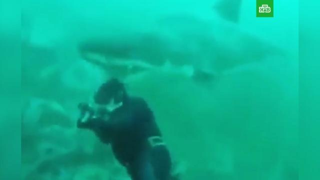 Огромная белая акула пыталась откусить голову дайверу.ЮАР, акулы, дайвинг.НТВ.Ru: новости, видео, программы телеканала НТВ