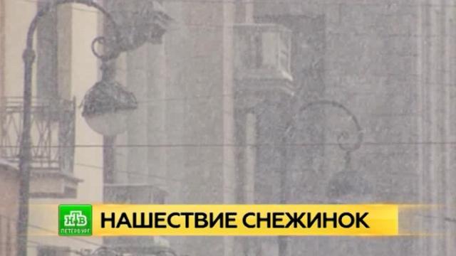 Северную столицу ожидает мощный снегопад.Санкт-Петербург, зима, погода, снег.НТВ.Ru: новости, видео, программы телеканала НТВ