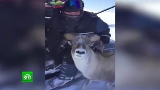 Зоозащитники опасаются отстрела редких животных из-за нового издания Красной книги