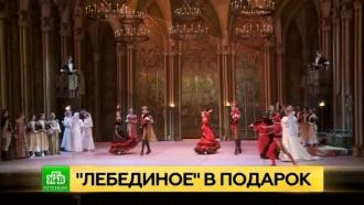 Артисты Большого подарят «Лебединое озеро» петербургским сиротам