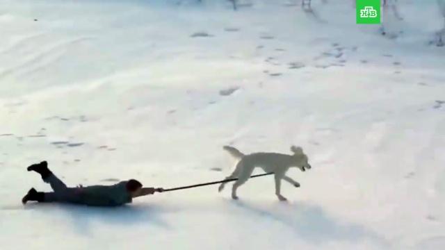 Больше чем друг: на что способна собака-поводырь.НТВ.Ru: новости, видео, программы телеканала НТВ
