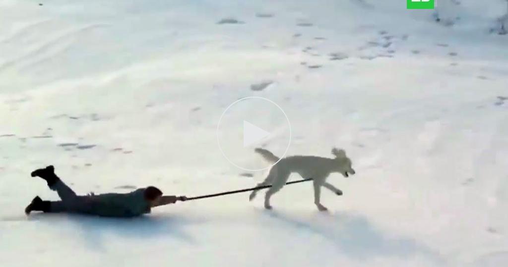 Зима извери: как домашние животные радуются снегу