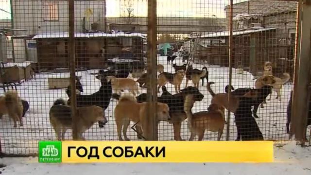 Собакам нужен дом: петербургские волонтеры рассказали истории о спасении четвероногих.Санкт-Петербург, животные, приюты для животных, собаки.НТВ.Ru: новости, видео, программы телеканала НТВ