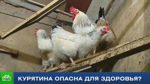 Птица несчастья: вредит ли здоровью россиян куриное мясо.продукты, птицы, спецрепортаж Итогов дня, торговля.НТВ.Ru: новости, видео, программы телеканала НТВ