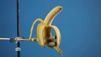 Солнечный плод: насколько опасна «банановая радиация»