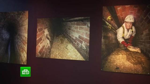 Найденная вканализации Лондона 130-тонная глыба нечистот выставлена вмузее.Великобритания, выставки и музеи, Лондон.НТВ.Ru: новости, видео, программы телеканала НТВ