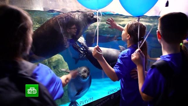 Участники «Ты супер!» послушали поющих моржей вокеанариуме.НТВ.Ru: новости, видео, программы телеканала НТВ