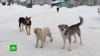 Следователи установят, кто подкармливал псов-людоедов в Истре