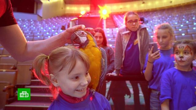 Участников проекта «Ты супер!» пригласили на цирковую арену.НТВ, дети и подростки, музыка и музыканты, телевидение, фестивали и конкурсы.НТВ.Ru: новости, видео, программы телеканала НТВ