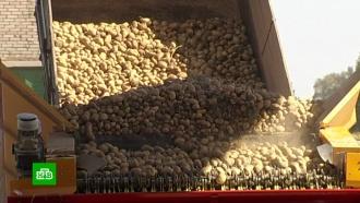Россия может ограничить ввоз картофеля из Белоруссии